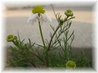 ナノちん、春が来たよ♪_b0151748_13153690.jpg