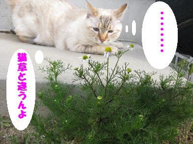 ナノちん、春が来たよ♪_b0151748_13155783.jpg