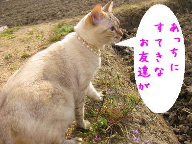 ナノちん、春が来たよ♪_b0151748_13172461.jpg