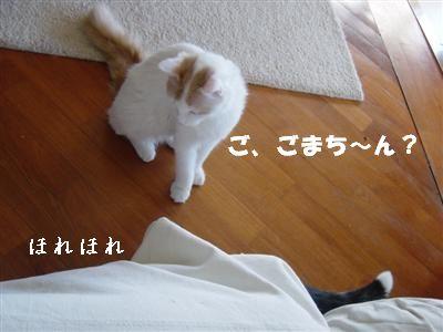 c0195250_1739557.jpg