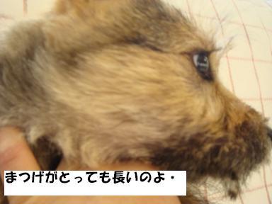 f0046854_20104321.jpg