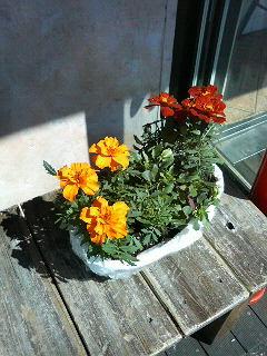 この花が幸せを_a0075684_22223467.jpg