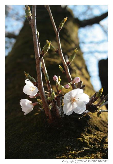 上野公園は春の匂い_f0181689_15145381.jpg