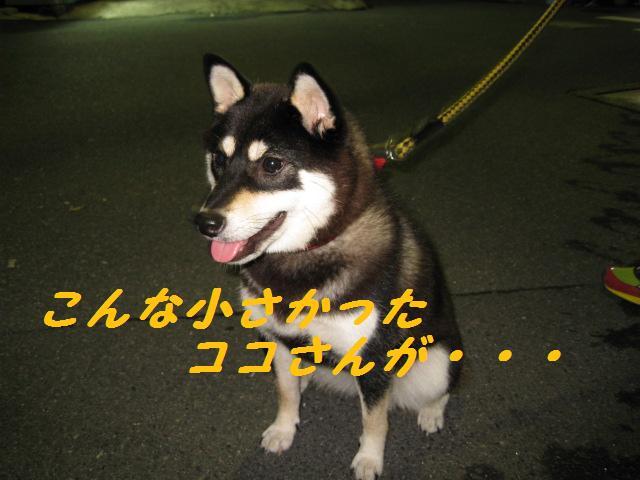 f0180994_0543597.jpg