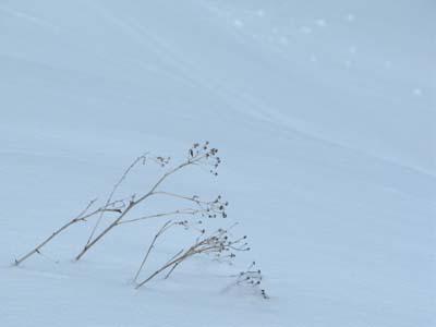 写真家 坂井道子先生の冬山の楽しみ_e0120896_9114588.jpg