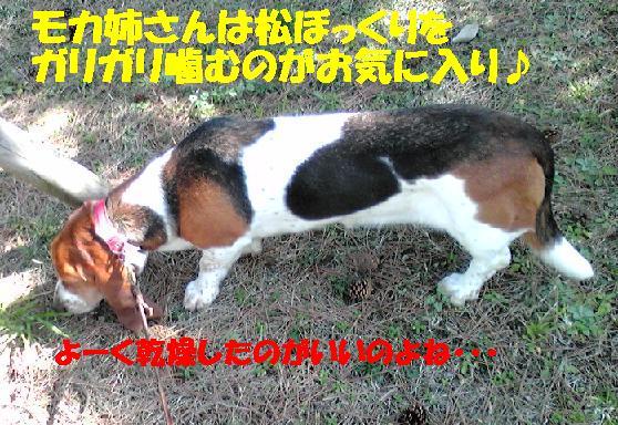 f0121712_1540193.jpg