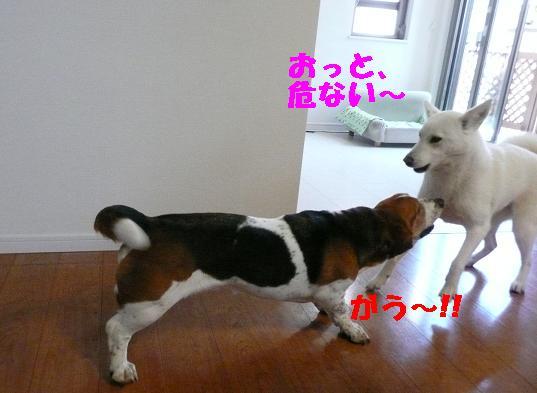 f0121712_15511823.jpg