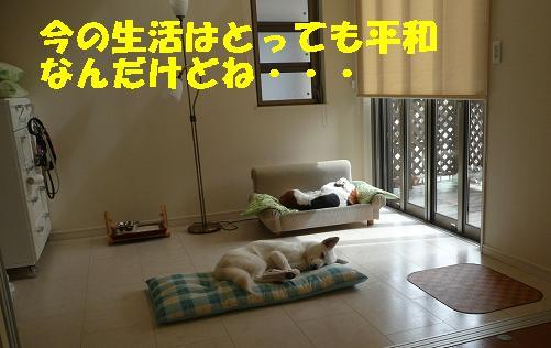 f0121712_1635126.jpg