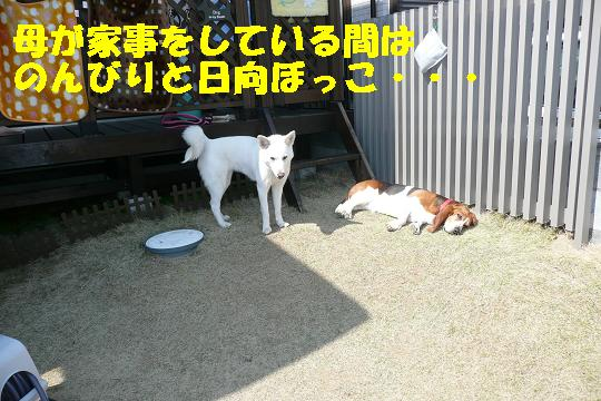 f0121712_1685083.jpg