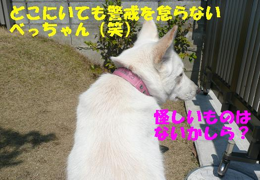 f0121712_1691550.jpg