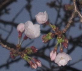 3月26日 27日 28日 春と偶然_e0136815_9414827.jpg