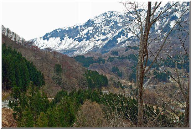 新芽の美人林(新潟県・松之山郷)_d0123528_1234683.jpg