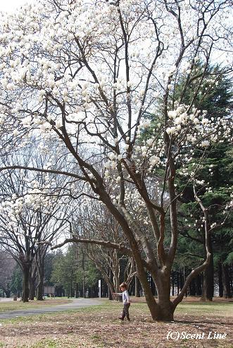 木蓮の木の下で_c0099133_0450100.jpg