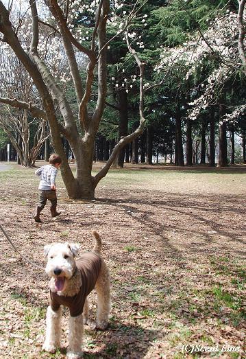 木蓮の木の下で_c0099133_0485064.jpg