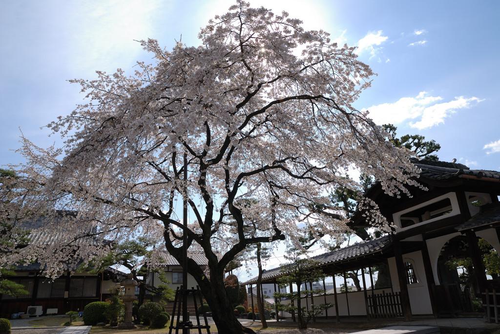 名古屋、杁中、香積院_c0171945_20145867.jpg