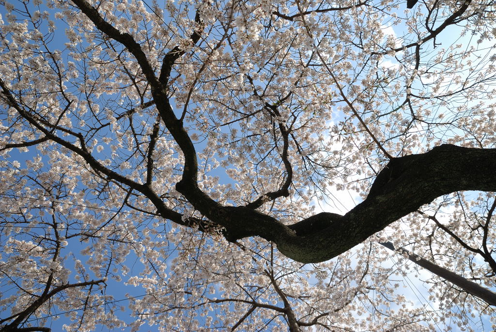 名古屋、杁中、香積院_c0171945_20395375.jpg