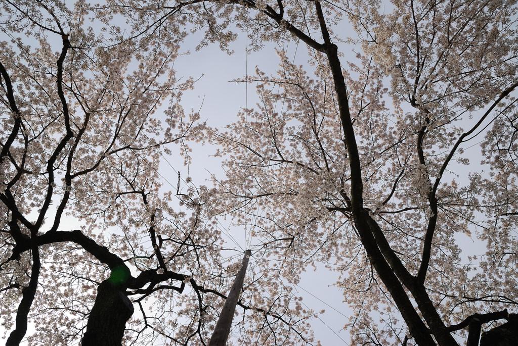 名古屋、杁中、香積院_c0171945_20441275.jpg