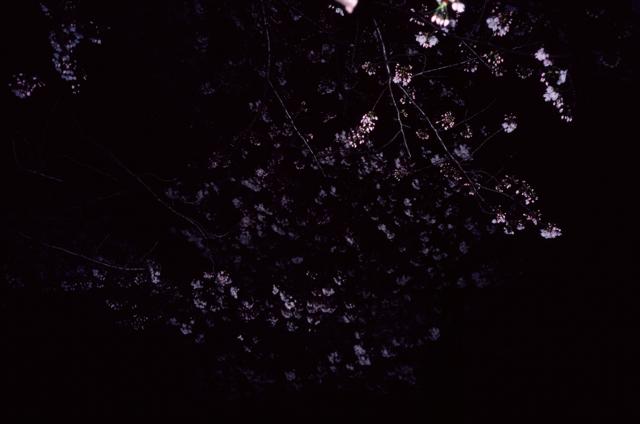 夜桜_f0135451_22372198.jpg