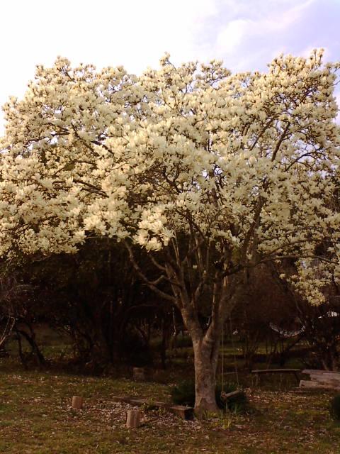 咲いたら散るね。_e0007456_9541117.jpg
