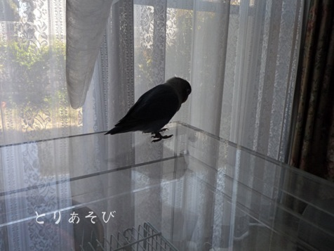 鳥の目_e0147757_0592315.jpg