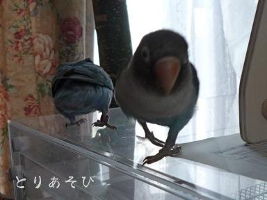 鳥の目_e0147757_131461.jpg