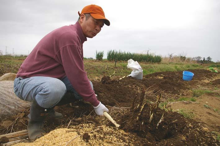 無事に越冬、実家の畑のサトイモ、連作障害をクリア:3・22_c0014967_2316645.jpg
