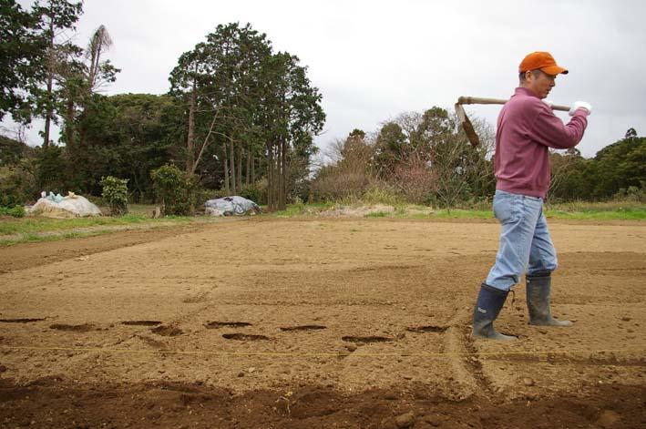 無事に越冬、実家の畑のサトイモ、連作障害をクリア:3・22_c0014967_23172283.jpg