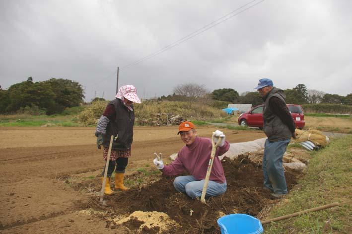 無事に越冬、実家の畑のサトイモ、連作障害をクリア:3・22_c0014967_23174833.jpg