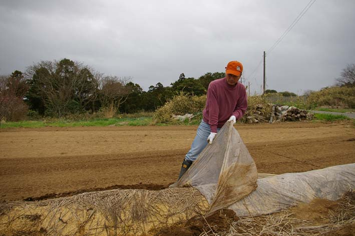 無事に越冬、実家の畑のサトイモ、連作障害をクリア:3・22_c0014967_23184224.jpg