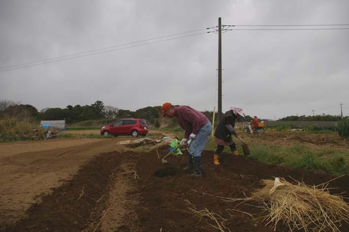 無事に越冬、実家の畑のサトイモ、連作障害をクリア:3・22_c0014967_23193622.jpg