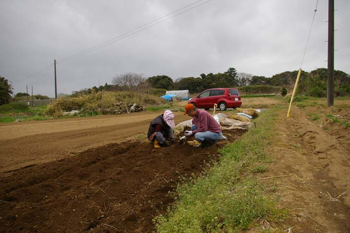 無事に越冬、実家の畑のサトイモ、連作障害をクリア:3・22_c0014967_23195138.jpg