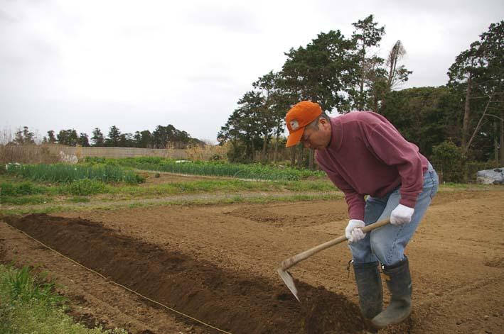 無事に越冬、実家の畑のサトイモ、連作障害をクリア:3・22_c0014967_2320891.jpg