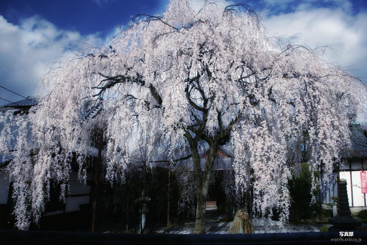 そうだ 京都、行こう。 4 _f0021869_1395459.jpg