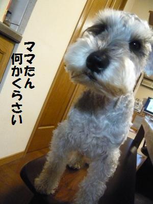 f0157373_2011895.jpg