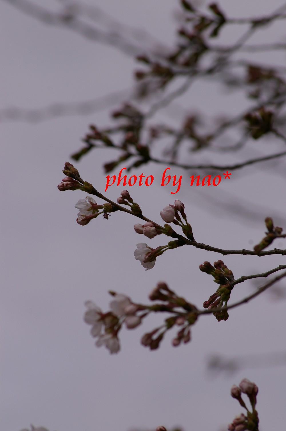f0152674_20482595.jpg