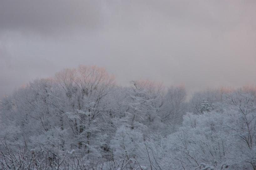 雪の華_f0180878_10343698.jpg