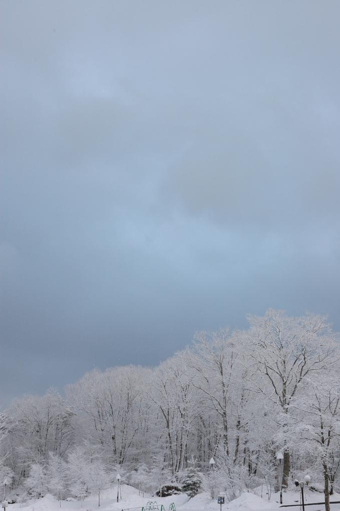 雪の華_f0180878_103461.jpg