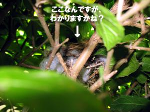 ナベゴロウ動物王国第三弾_f0144385_1820558.jpg