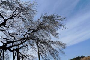 奥山田(岡崎)の枝垂れ桜_b0142989_21122247.jpg