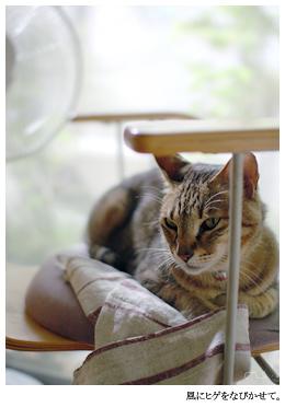 猫には風との距離も大切。