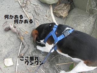 d0104209_2010171.jpg