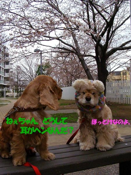 b0067012_0365445.jpg