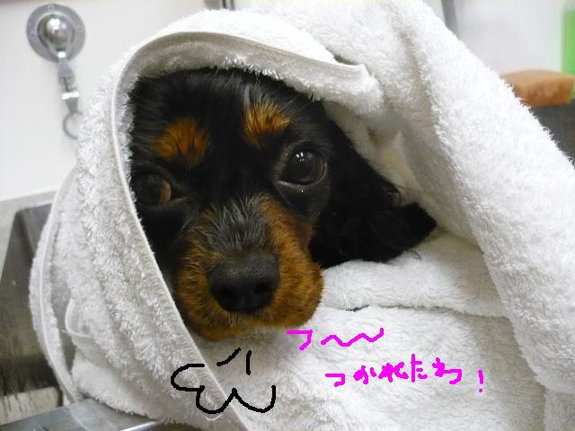 最弱の・・・&もうお姉さんよ!&犬濯屋レシピ!!_b0130018_17444784.jpg
