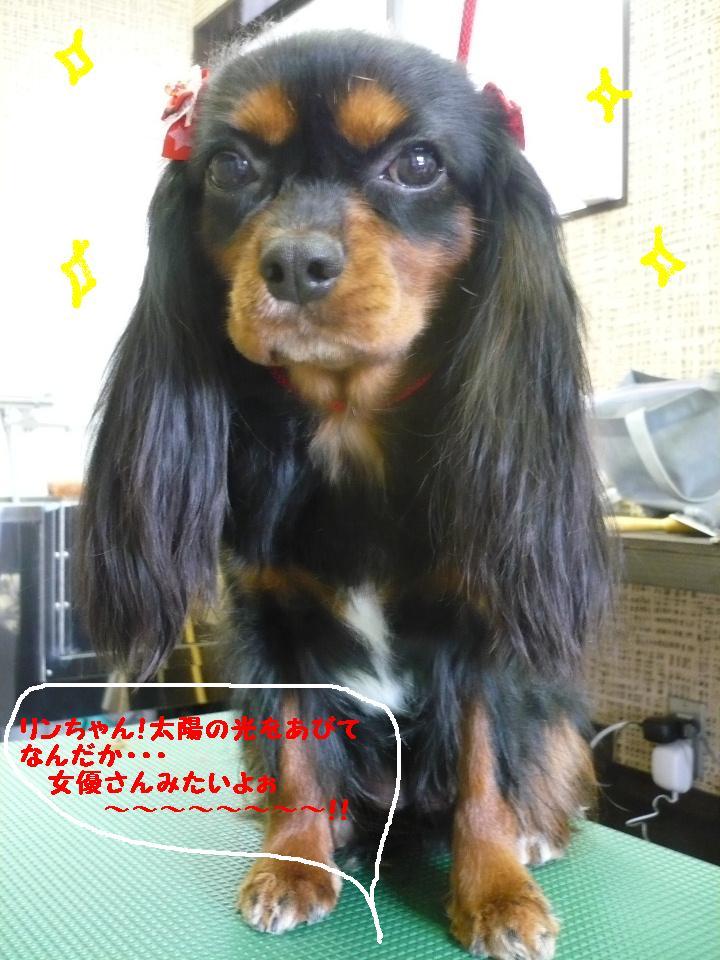 最弱の・・・&もうお姉さんよ!&犬濯屋レシピ!!_b0130018_1745189.jpg