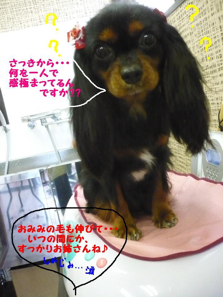 最弱の・・・&もうお姉さんよ!&犬濯屋レシピ!!_b0130018_17452542.jpg