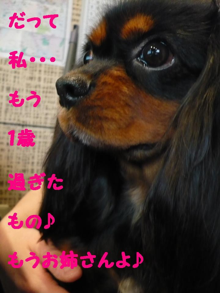 最弱の・・・&もうお姉さんよ!&犬濯屋レシピ!!_b0130018_17461830.jpg