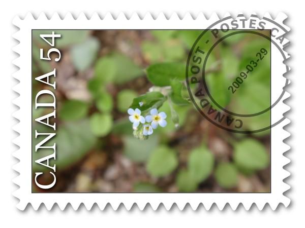 野の花だより_c0026824_13123582.jpg