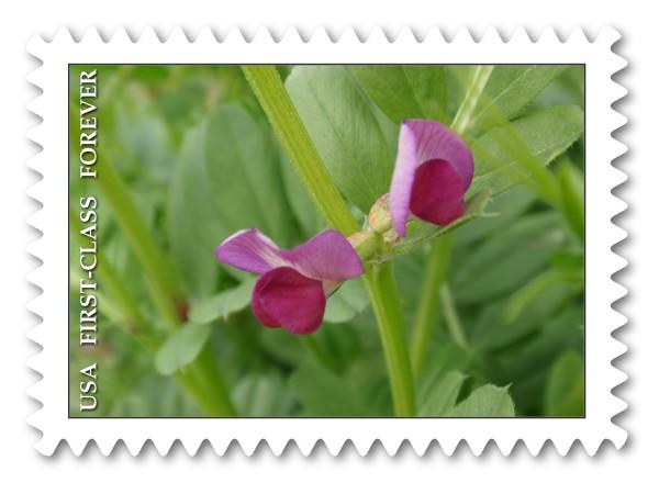 野の花だより_c0026824_13131144.jpg