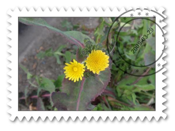 野の花だより_c0026824_13402882.jpg