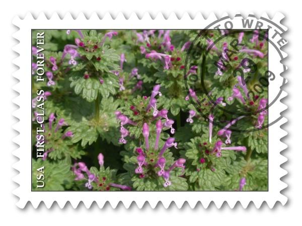 野の花だより_c0026824_13405671.jpg